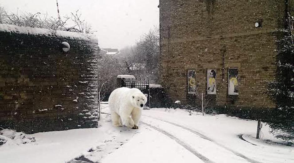 Sum Polar Bear-2